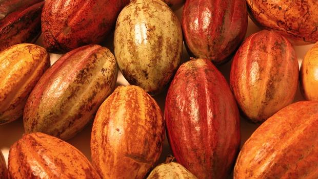 variedades-cacao